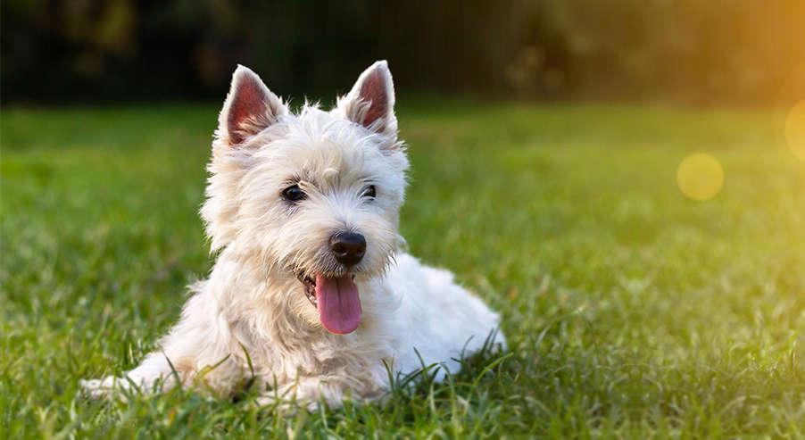 Pies na sztucznej trawie